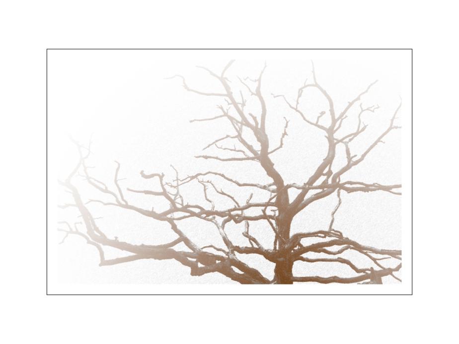 tree of life 12x16